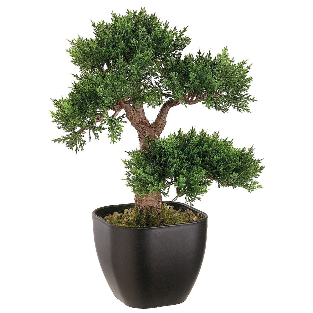 Allstate Floral Lpb552 Gr 15 Artificial Cedar Bonsai Tree In Black