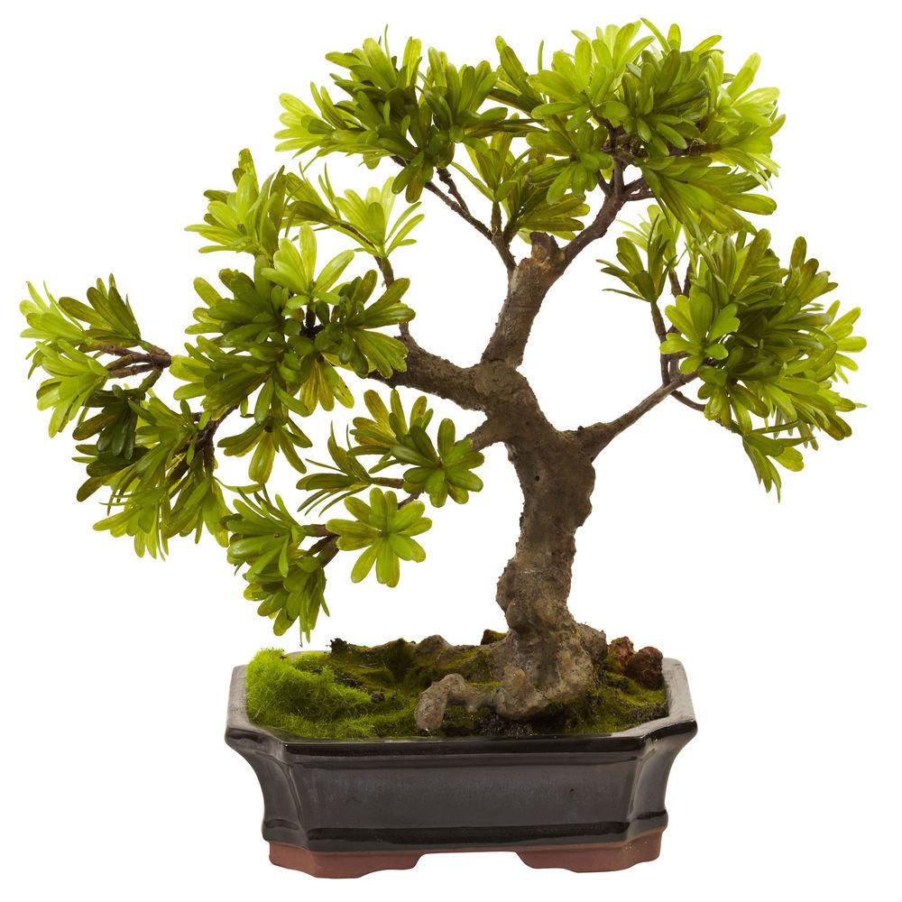 Nearly Natural Podocarpus W Mossed Bonsai Planter