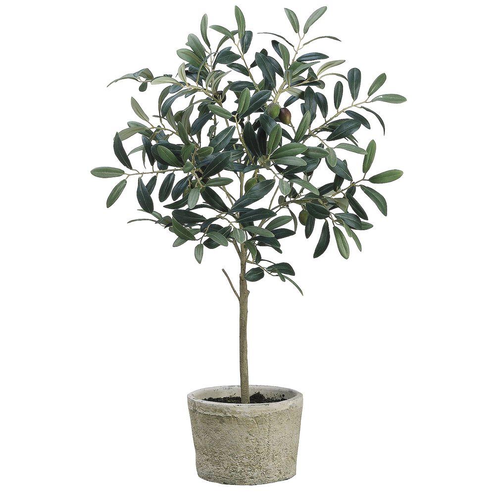 """TREE, OLIVE, IN POT, 26""""H"""