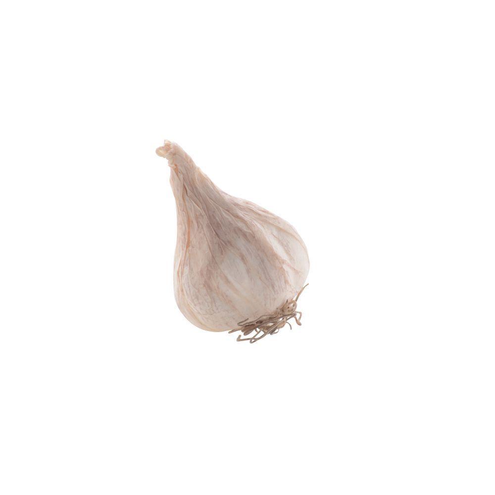 Turnip,Imitation,White 52037